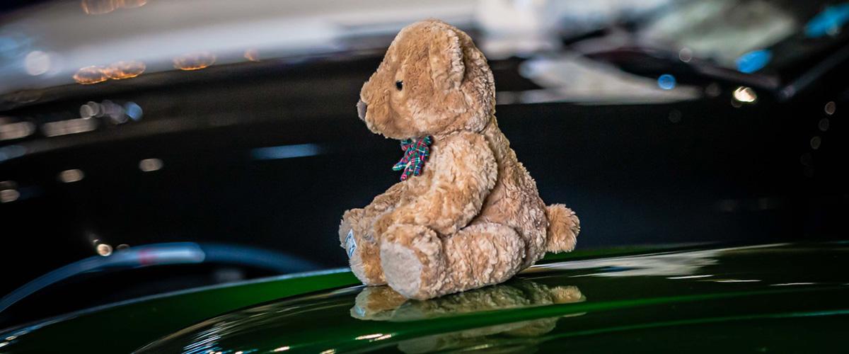 Sporting bear on a shiny car bonnet